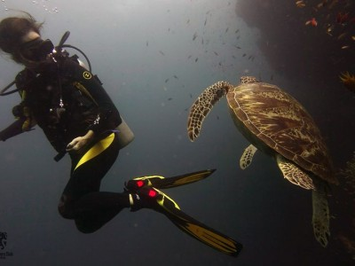 Bohol Dive Center Alona Filipinas Club Buceo 1085