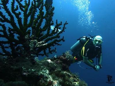 Bohol Dive Center Alona Filipinas Club Buceo 1115