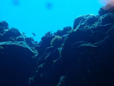 Bohol Dive Center Alona Filipinas Club Buceo 120
