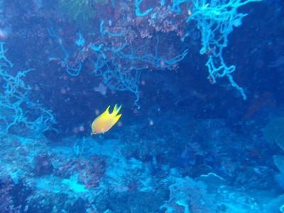 Bohol Dive Center Alona Filipinas Club Buceo 24