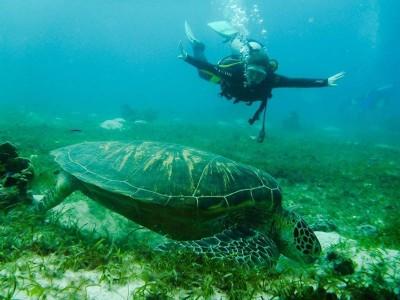 Bohol Dive Center Alona Filipinas Club Buceo 281
