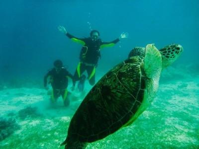 Bohol Dive Center Alona Filipinas Club Buceo 406