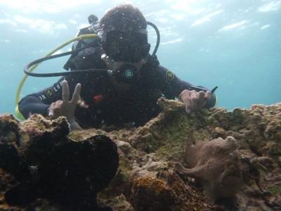 Bohol Dive Center Alona Filipinas Club Buceo 522