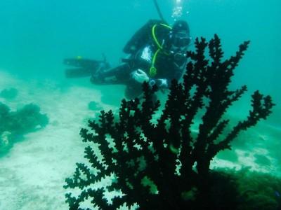 Bohol Dive Center Alona Filipinas Club Buceo 546