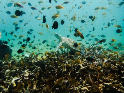Bohol Dive Center Alona Filipinas Club Buceo 583