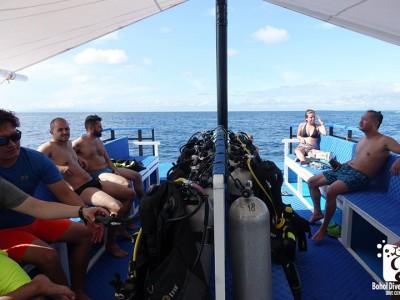 Bohol Dive Center Alona Filipinas Club Buceo 904