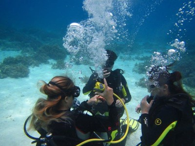 Bohol Dive Center Alona Filipinas Club Buceo 266