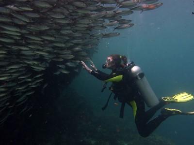 Bohol Dive Center Alona Filipinas Club Buceo 1064