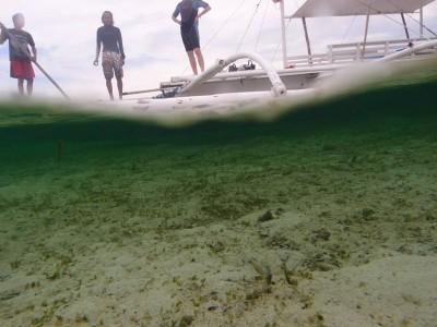 Bohol Dive Center Alona Filipinas Club Buceo 159