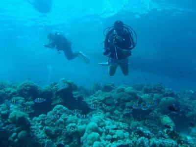 Bohol Dive Center Alona Filipinas Club Buceo 2