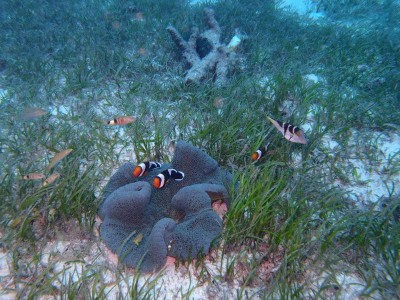 Bohol Dive Center Alona Filipinas Club Buceo 209