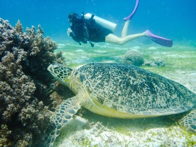 Bohol Dive Center Alona Filipinas Club Buceo 367