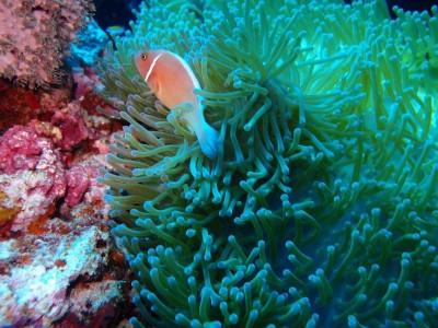 Bohol Dive Center Alona Filipinas Club Buceo 38