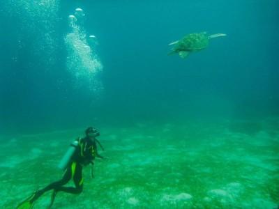 Bohol Dive Center Alona Filipinas Club Buceo 416