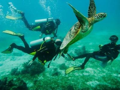 Bohol Dive Center Alona Filipinas Club Buceo 431