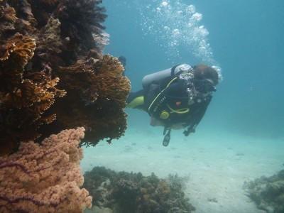 Bohol Dive Center Alona Filipinas Club Buceo 501