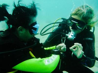 Bohol Dive Center Alona Filipinas Club Buceo 562