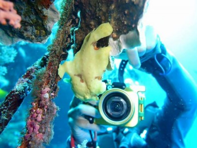 Bohol Dive Center Alona Filipinas Club Buceo 811