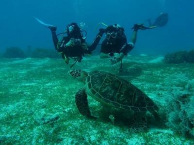 Bohol Dive Center Alona Filipinas Club Buceo 817