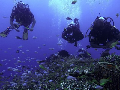Bohol Dive Center Alona Filipinas Club Buceo 881