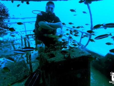 Bohol Dive Center Alona Filipinas Club Buceo 926