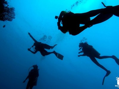Bohol Dive Center Alona Filipinas Club Buceo 957